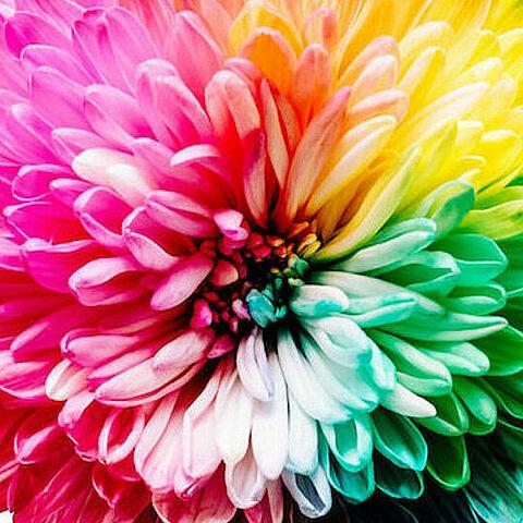 Bunte Blüte Rechteck
